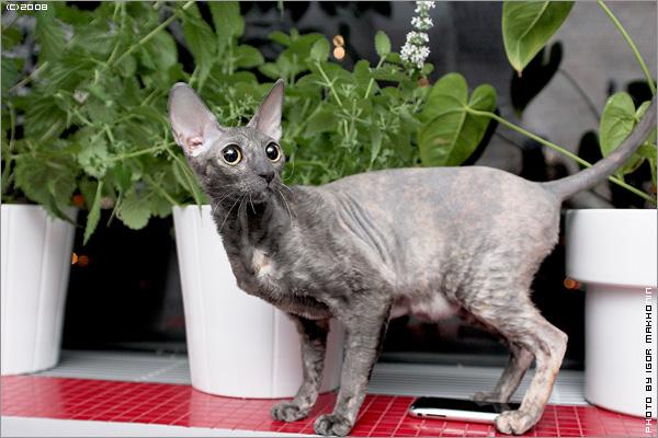 cat-iphone