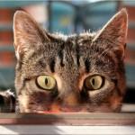 Дневник кота Плинтуса.