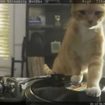 Dj cats from 1992